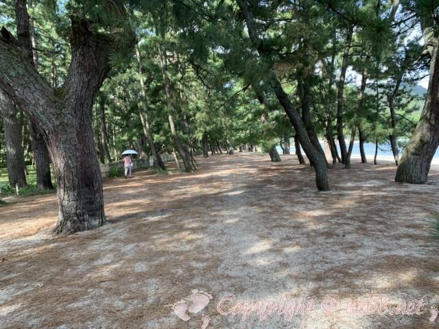 気比の松原(福井県敦賀市)の駐車場から松林と右方向に海を