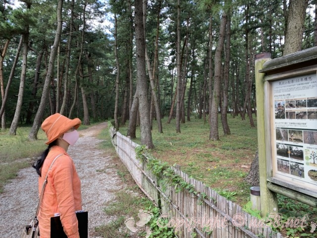 気比の松原(福井県敦賀市)の遊歩道