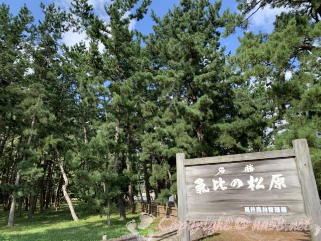 気比の松原(福井県敦賀市)の看板と松林