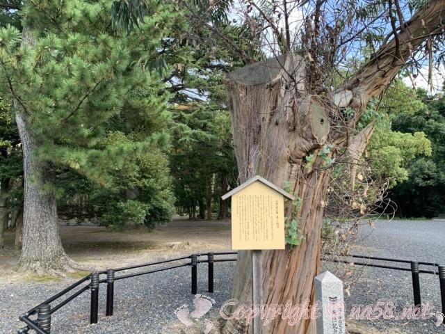 氣比神宮(福井県敦賀市)・境内 天然記念物のユーカリの巨樹