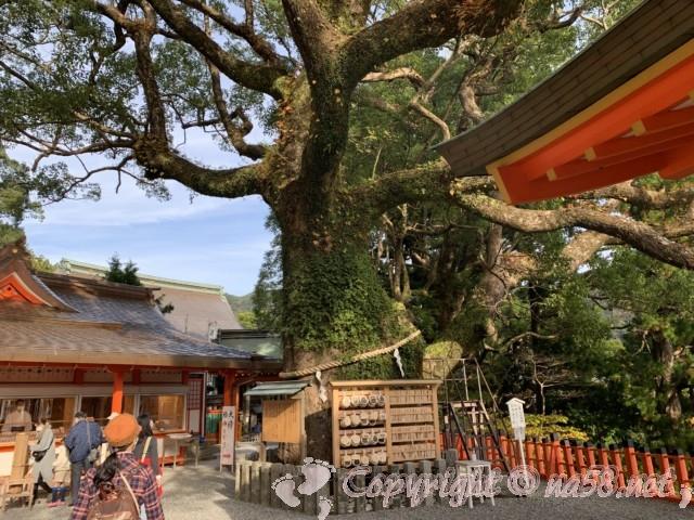 熊野那智大社(和歌山県那智勝浦町)境内にある那智の樟(くす)