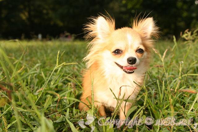 犬 ペット 屋外の草にいるわんちゃん