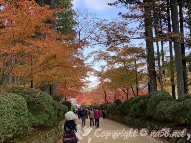 高野山(和歌山県高野町)秋の紅葉 観光