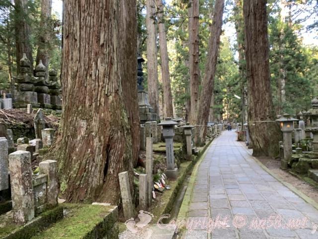 高野山の奥の院の参道 杉の大木と墓碑