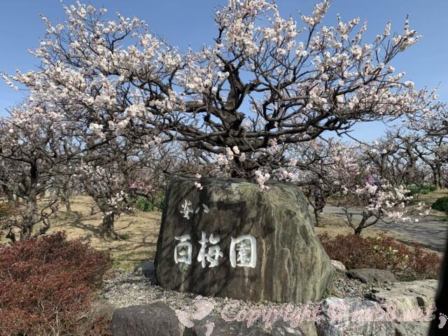 安八百梅園(岐阜県安八町)百梅園の石碑と満開の梅
