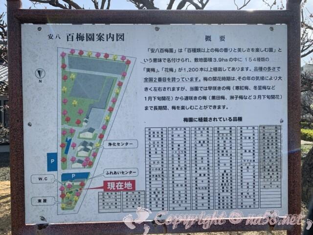 安八百梅園(岐阜県安八町)案内図
