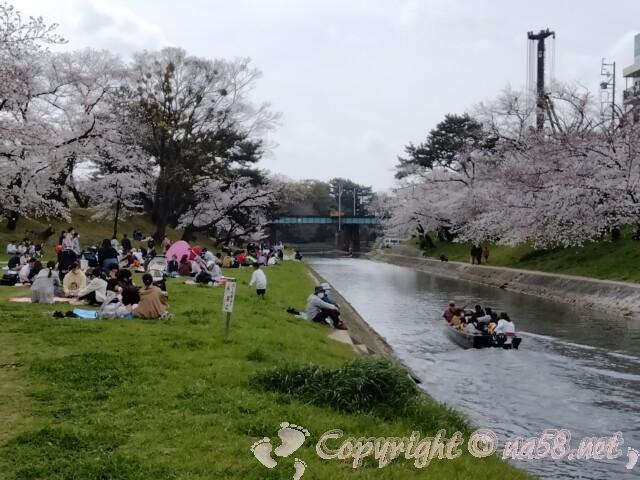 岡崎桜まつり 伊賀川沿いの大木の桜並木と舟遊び