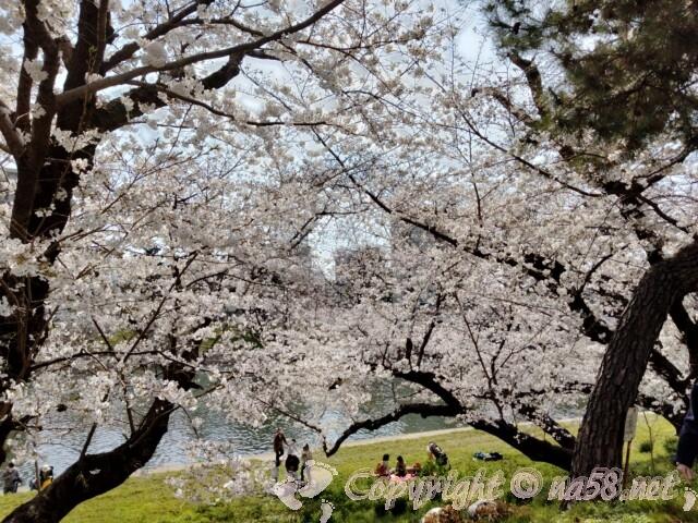 岡崎桜まつり 伊賀川沿いの大木の桜並 川の上からの景色