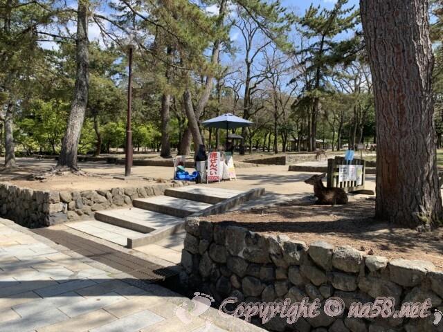 奈良公園内でシカせんべいを売っている人