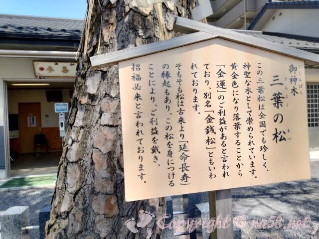 別小江神社(名古屋市北区)御神木は三葉の松