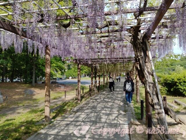 名古屋城 藤の回廊 藤棚