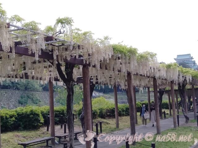 名古屋城と藤の回廊(白い藤とともに)