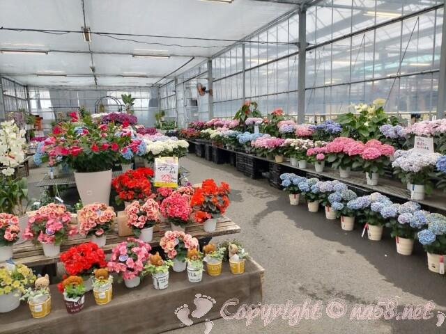 伊木山ガーデン(各務原市)鉢植えの花など