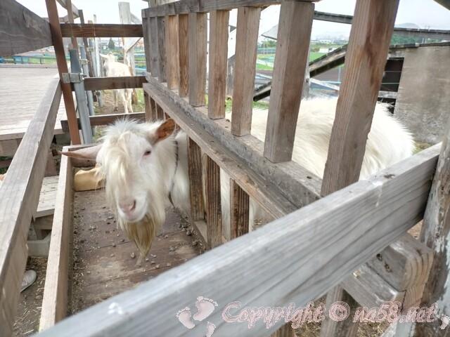 伊木山ガーデン(各務原市)にいるヤギ