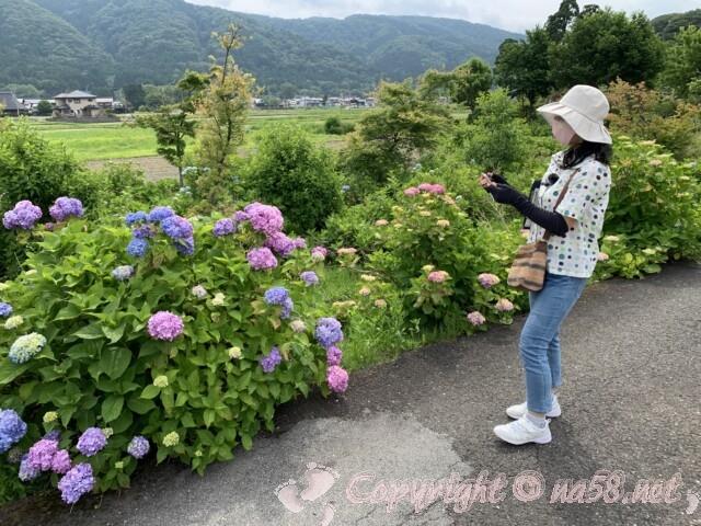 全長寺(ぜんちょうじ)滋賀県長浜市 周辺農道付近のあじさいと景色
