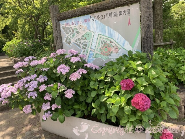 もりやま芦刈園(滋賀県守山市)のあじさい 園内案内図