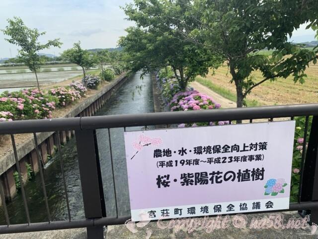 宮荘川のあじさい(滋賀県東近江市)橋にかけてある案内と川岸のあじさい