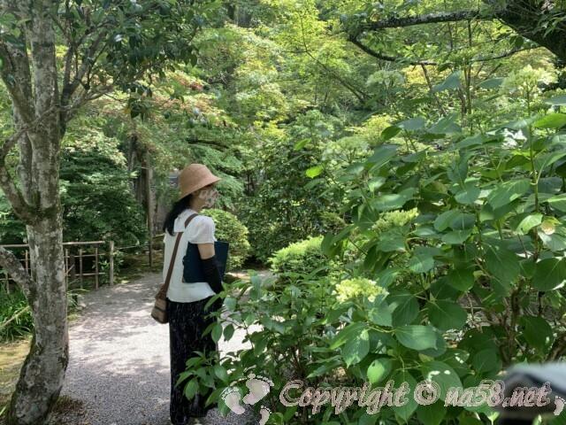 金剛輪寺(滋賀県愛知郡)名勝庭園の奥のあじさい