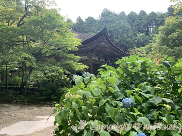 金剛輪寺(滋賀県愛知郡)本堂とあじさい