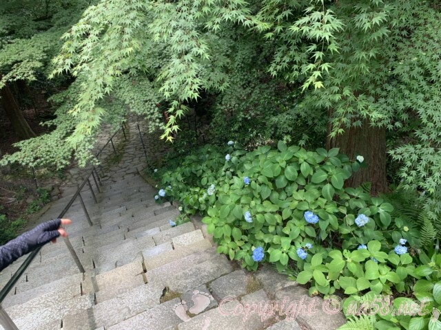 金剛輪寺(滋賀県愛知郡)二天門の手前の石段とあじさい