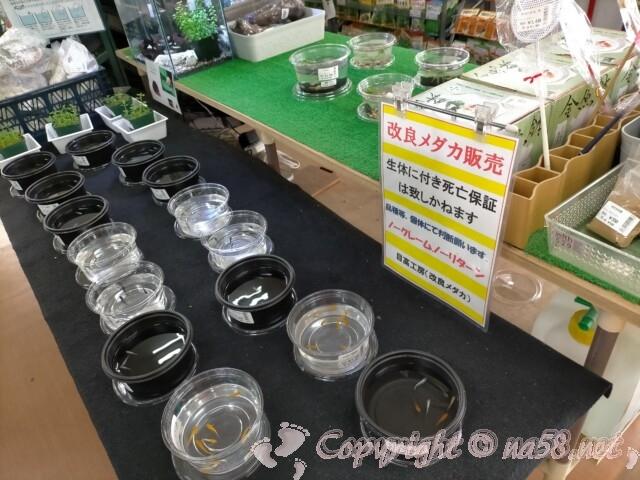 日本ライン花木センター・高級めだか販売