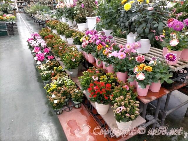 日本ライン花木センター・花 鉢植え