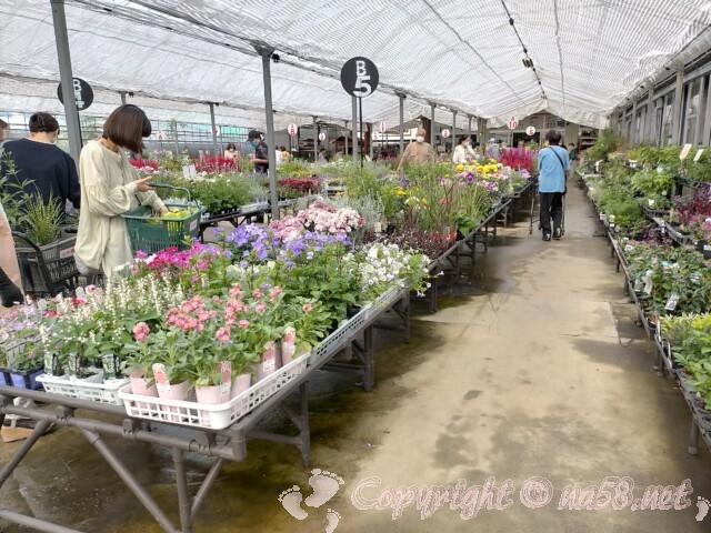日本ライン花木センター・花 鉢植えなど