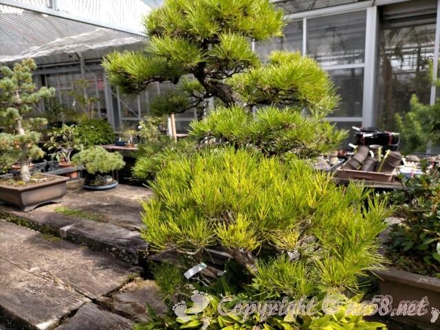 日本ライン花木センター・盆栽