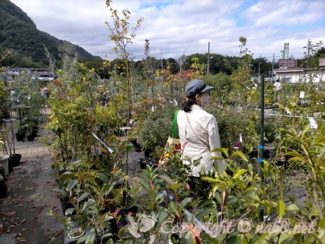 日本ライン花木センター・屋外の花木 果樹